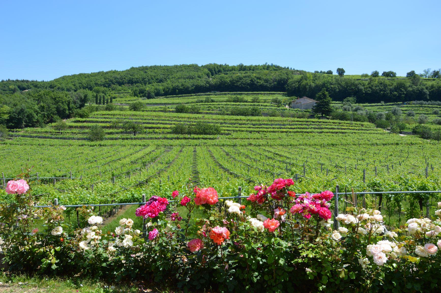 Le Marognole winery: Opposites attract!