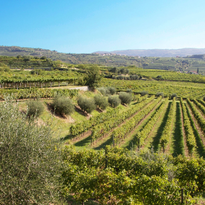 A cooking class in Valpolicella