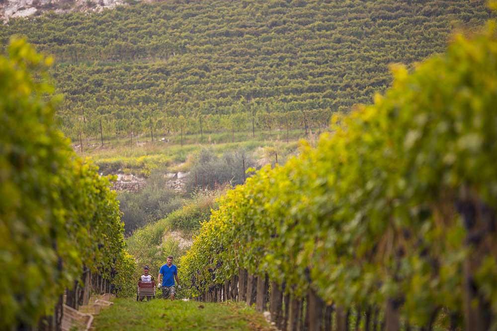 Valpolicella: un paradiso del vino
