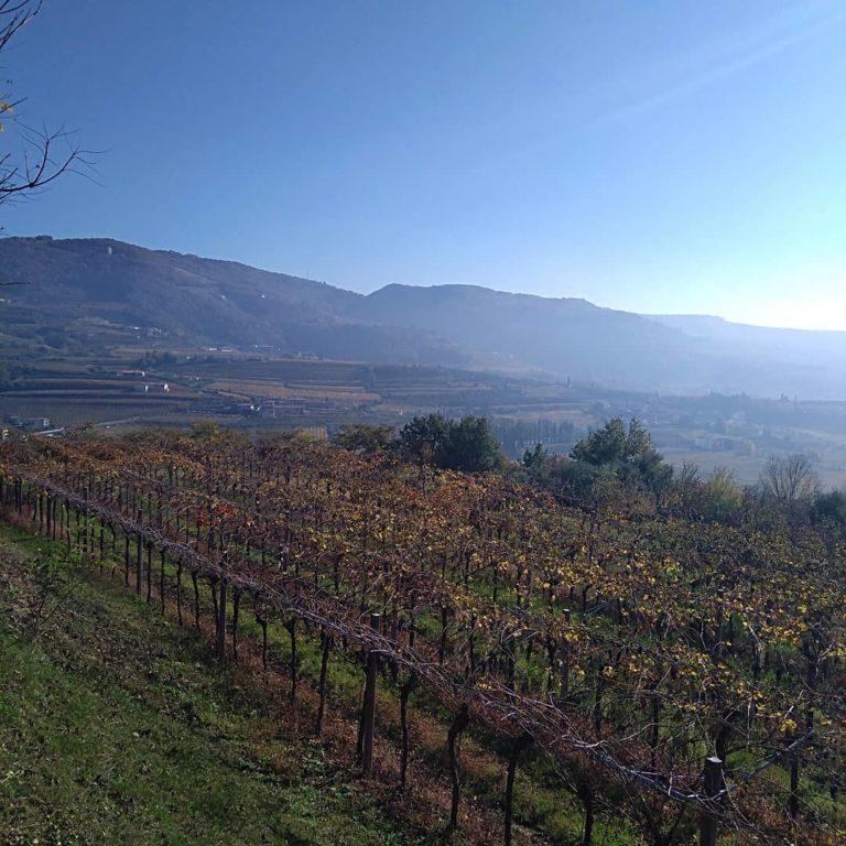 Fall in Valpolicella