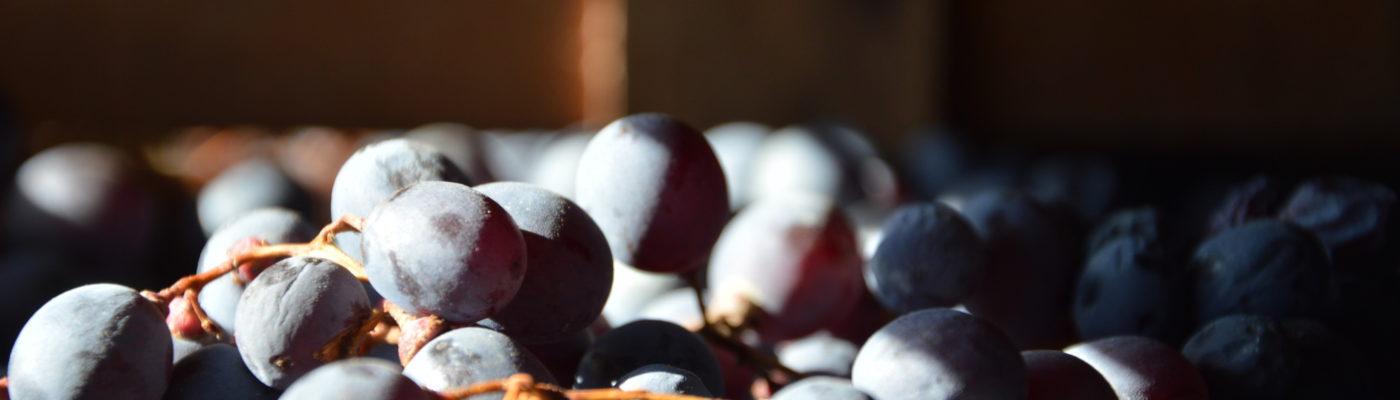 """Recioto — the """"one in three"""" wine"""