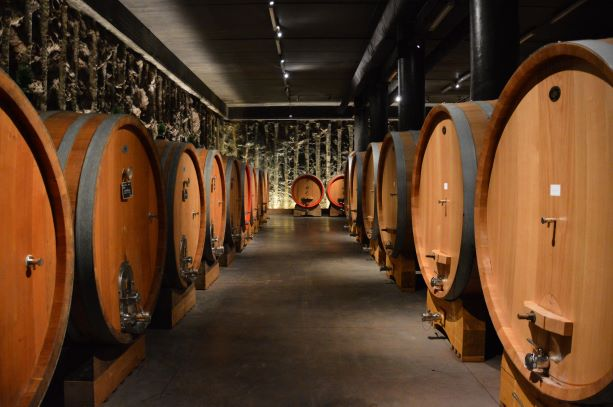 Barrel room in Valpolicella