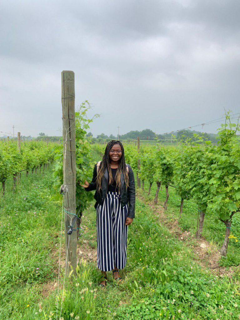 Kaloti in the vineyards
