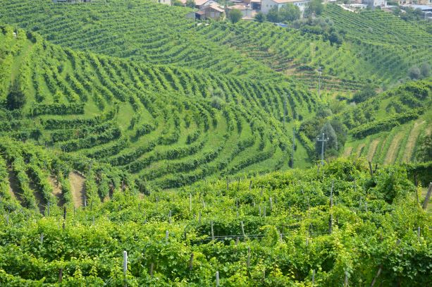 View on Conegliano and Valdobbiadene landscape