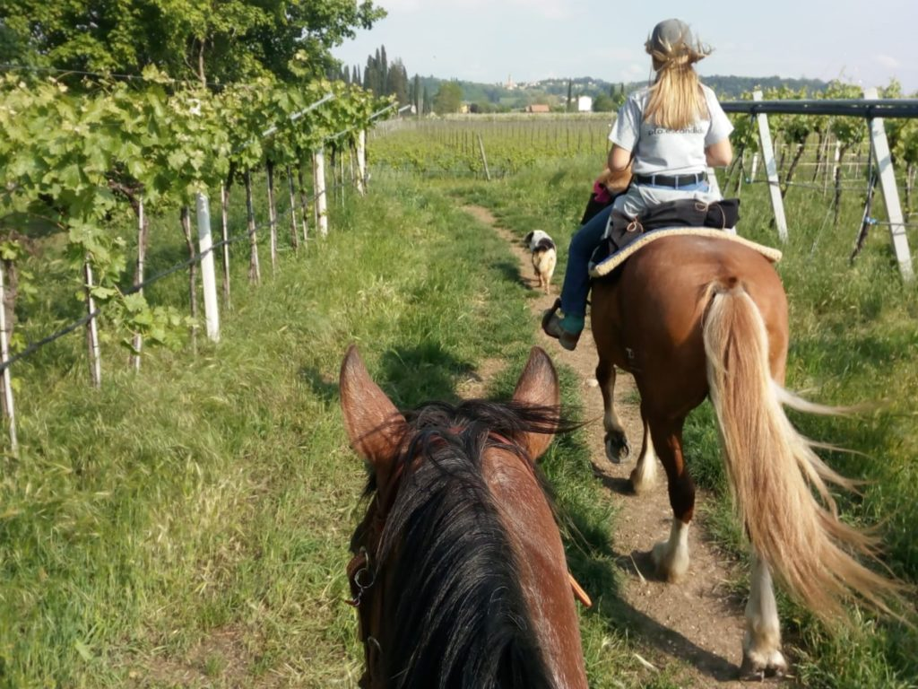 One of our guest riding a horse in the vineyards during our Horse and Wine Tour