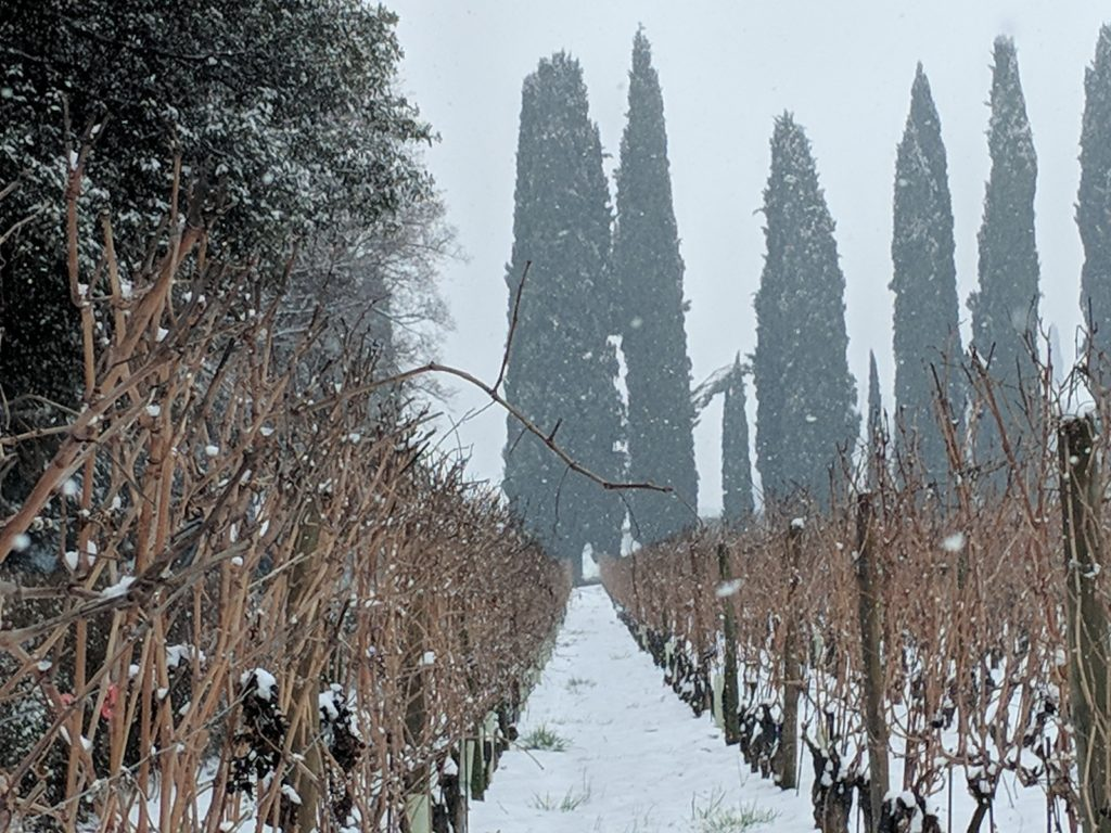 Vineyards in Valpolicella covered with snow in December