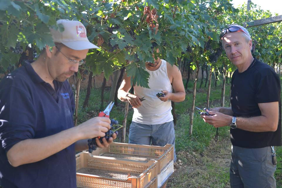 Alberto, on the foreground on the left, checking the quality of his grapes during the harvest