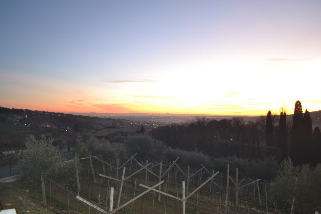 The view you can enjoy from the tasting room of Vogadori's winery