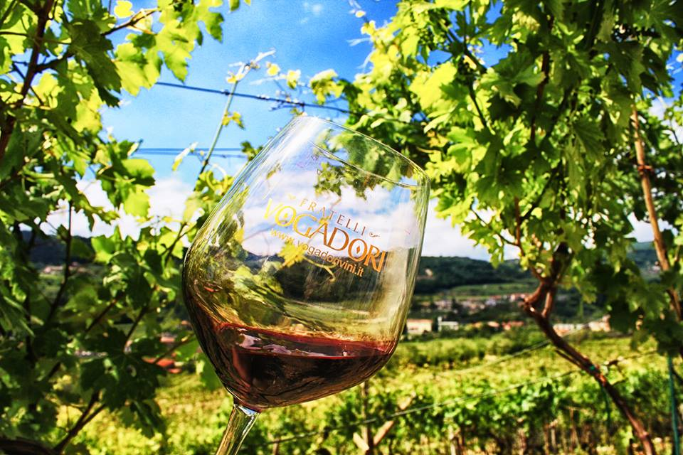 Wine and vineyards at Fratelli Vogadori's winery