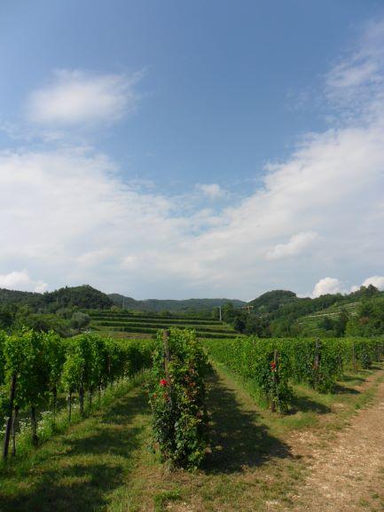 Novaia's organic vineyards